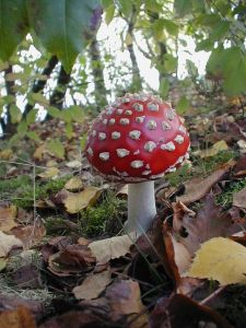 toadstool-from-fairy-tale-1-1409278-639x852-compressor