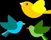birds-md